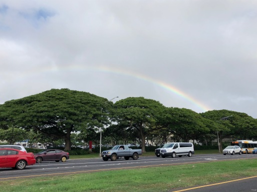 Rainbow over the Monkeypod trees.